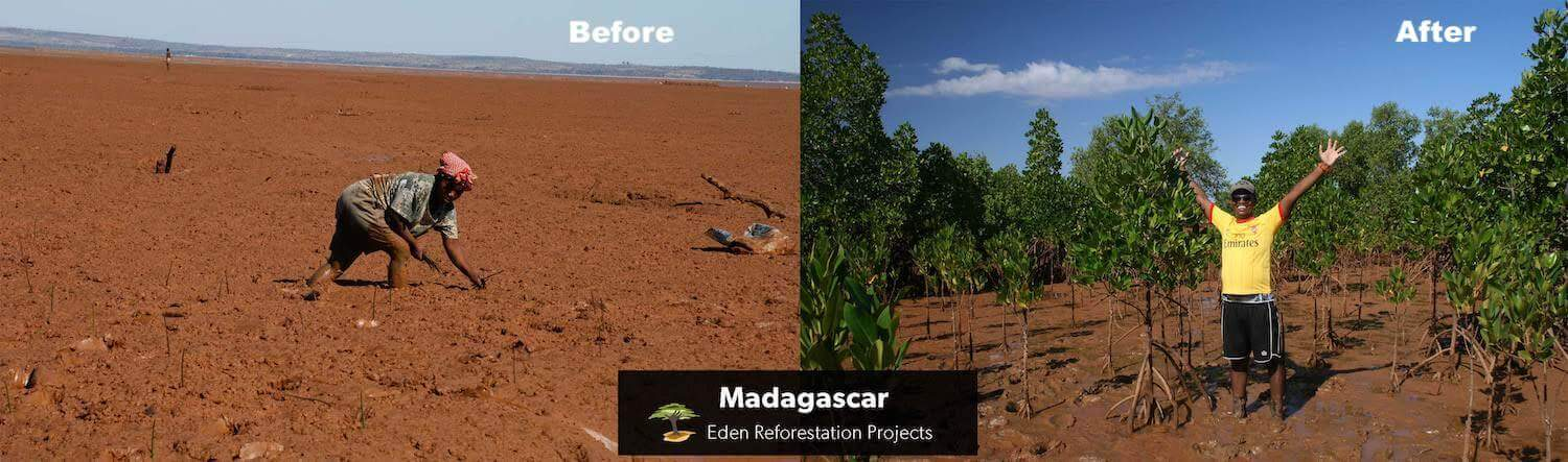 before and after mangrove planting