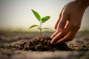 planting ten trees